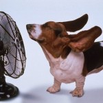 Help Your Dog Beat the Heat! Tips for Canine Summer Safety!
